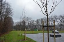 Drzewa liściaste w okolicy parkingu i stadionu