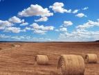 pole ze skoszonym zbożem, widoczne na pierwszym planie bele siana